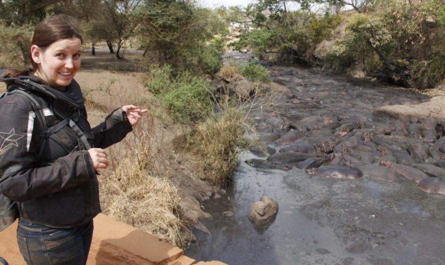 Hundreds of hippos in Katavi!
